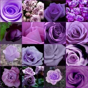 beautyharmony-purple-collage